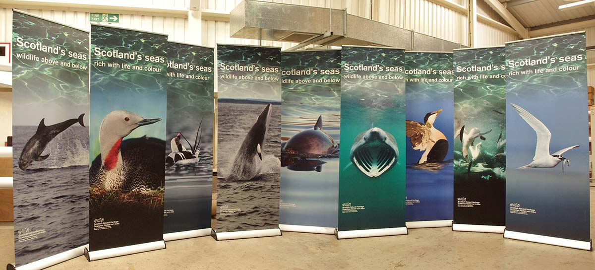 banner highlighting scotlands's seas wildlife above and below